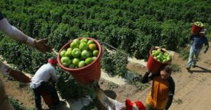 Farm Industry Back Democrats in Amnesty-for-Cheap-Labor Swap